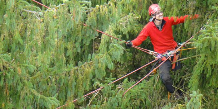 Baumexperten im Einsatz für eine nachhaltige Waldentwicklung