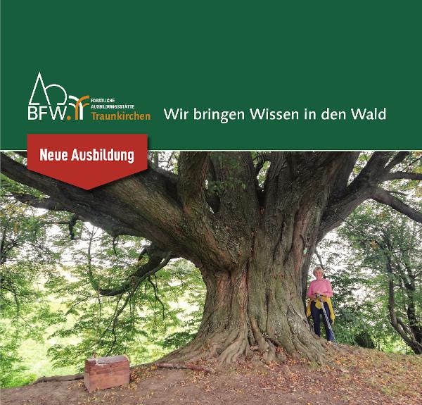 Zertifikatslehrgang Baumprüfungen und Baumpflege